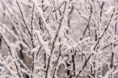 Inverno del fondo di brina della neve dei rami Immagine Stock Libera da Diritti