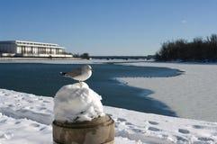 Inverno del Washington DC Immagini Stock