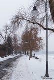 Inverno dell'albero di strada pedonale Immagine Stock