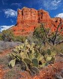 Inverno dell'Arizona Fotografia Stock