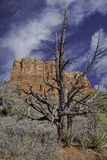 Inverno dell'Arizona Immagini Stock
