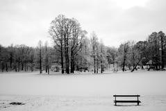 Inverno della foresta Immagini Stock Libere da Diritti