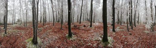 Inverno della foresta 360 gradi di panorama Fotografie Stock Libere da Diritti