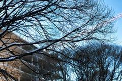 Inverno della gru della costruzione di edifici Fotografie Stock