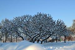 Inverno della natura Fotografia Stock