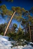 Inverno della neve Fotografia Stock Libera da Diritti