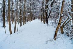 Inverno della traccia di escursione di Snowy immagini stock libere da diritti