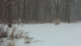 Inverno di Maybee Immagine Stock Libera da Diritti