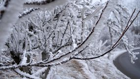 Inverno di Sabanta Fotografia Stock Libera da Diritti