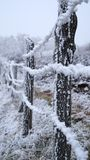 Inverno di Sabanta Fotografie Stock
