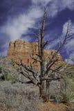 inverno do Arizona Imagens de Stock