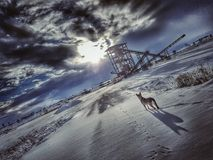 inverno do cão imagens de stock royalty free