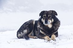 inverno do cão disperso na neve A neve está caindo Imagem de Stock
