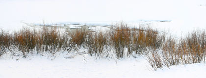 Inverno do rio de serpente Imagem de Stock