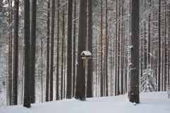 Inverno do russo Fotos de Stock Royalty Free