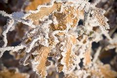 inverno do Whit no mais forrest Fotografia de Stock Royalty Free