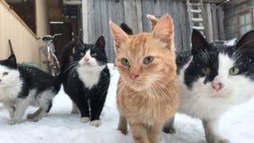 inverno dos gatos da jarda do grupo filme