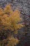 Inverno dourado Imagens de Stock Royalty Free