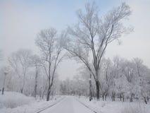 Inverno e precipitazioni nevose pesanti fotografia stock libera da diritti