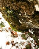inverno e tiro macro de classificação Fotos de Stock Royalty Free