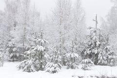 inverno em árvores de Natal nevado da floresta do pinho Natureza natural do inverno do cenário Fundo do Natal Floresta após a que Fotografia de Stock Royalty Free