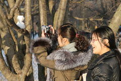 Inverno em Central Park Fotos de Stock Royalty Free