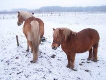 Inverno em Holland 3 Imagem de Stock Royalty Free