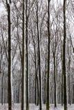 inverno em Hungria imagem de stock