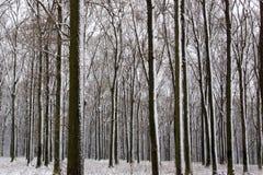 inverno em Hungria foto de stock royalty free