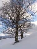 Inverno em montanhas de Ciucas Foto de Stock