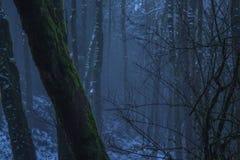 inverno em Oregon Fotografia de Stock