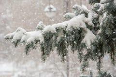 Inverno em Sibéria Fotografia de Stock