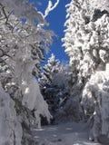 Inverno em uma floresta fotografia de stock royalty free