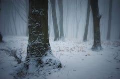 Inverno em uma floresta congelada com geada e névoa da neve Fotografia de Stock