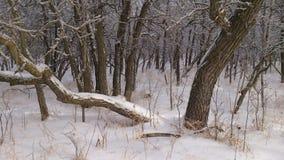 inverno em Winnipeg Imagens de Stock