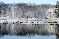 Inverno encantador imagens de stock royalty free