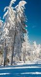 Inverno ensolarado Fotografia de Stock