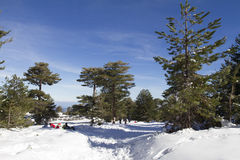 Inverno Etna del nord Fotografie Stock Libere da Diritti