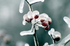 Inverno favoloso 2011 a Mosca dopo la pioggia ghiacciata fotografia stock