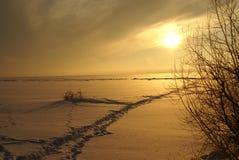 Inverno field Immagini Stock