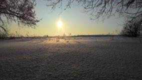 Inverno field Fotografia Stock