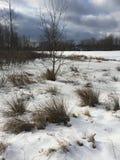Inverno field Immagini Stock Libere da Diritti
