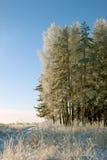 Inverno Floresta do russo Fotos de Stock