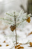 Inverno, fondo, natale, foresta, paesaggio, natura, neve Fotografie Stock Libere da Diritti