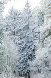 Inverno, fondo, natale, foresta, paesaggio, natura, neve Fotografie Stock