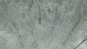 inverno Forest Aerial View video estoque