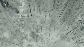 inverno Forest Aerial View filme