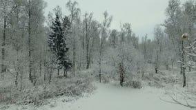 inverno Forest Aerial View vídeos de arquivo