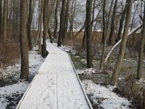 Inverno Forest And Footpath fotografia stock