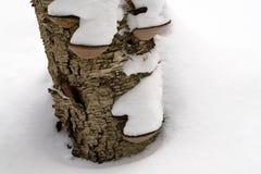 inverno Forest Landscape - Birchbark de deterioração foto de stock